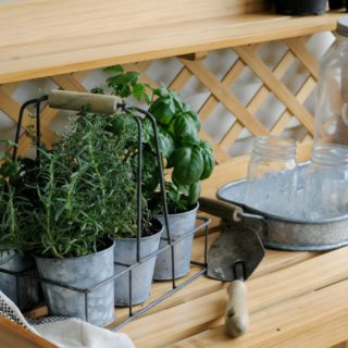 {Tips & Tricks} Cooking with Herbs