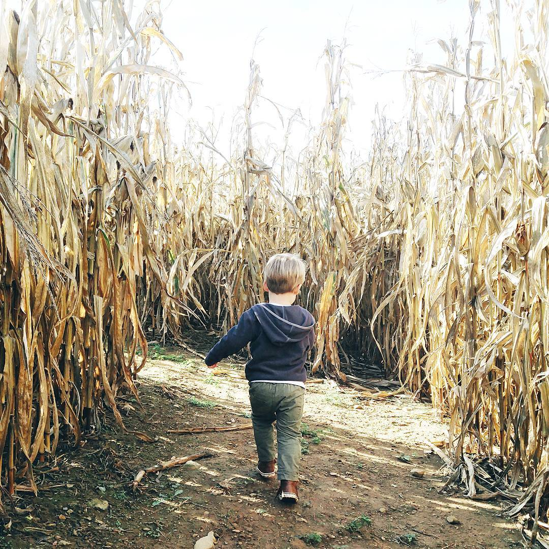 Theres nothing like getting lost in the kid corn mazehellip