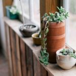 Caring for an Indoor Succulent