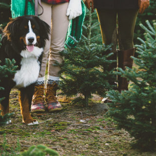 How to Make the Holidays Special for Dogs