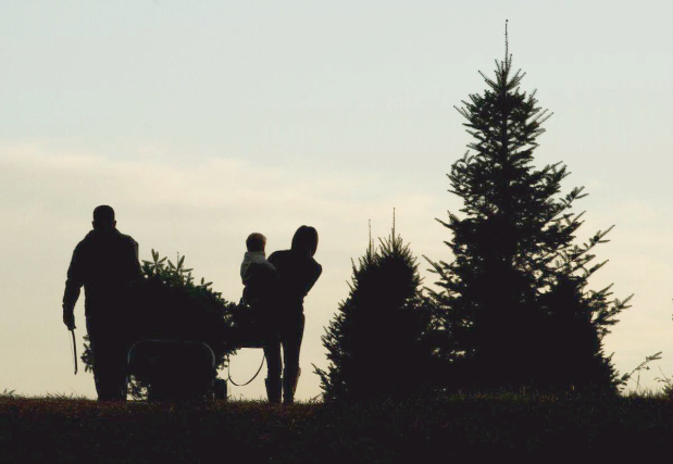 gaver farm christmas tree farm