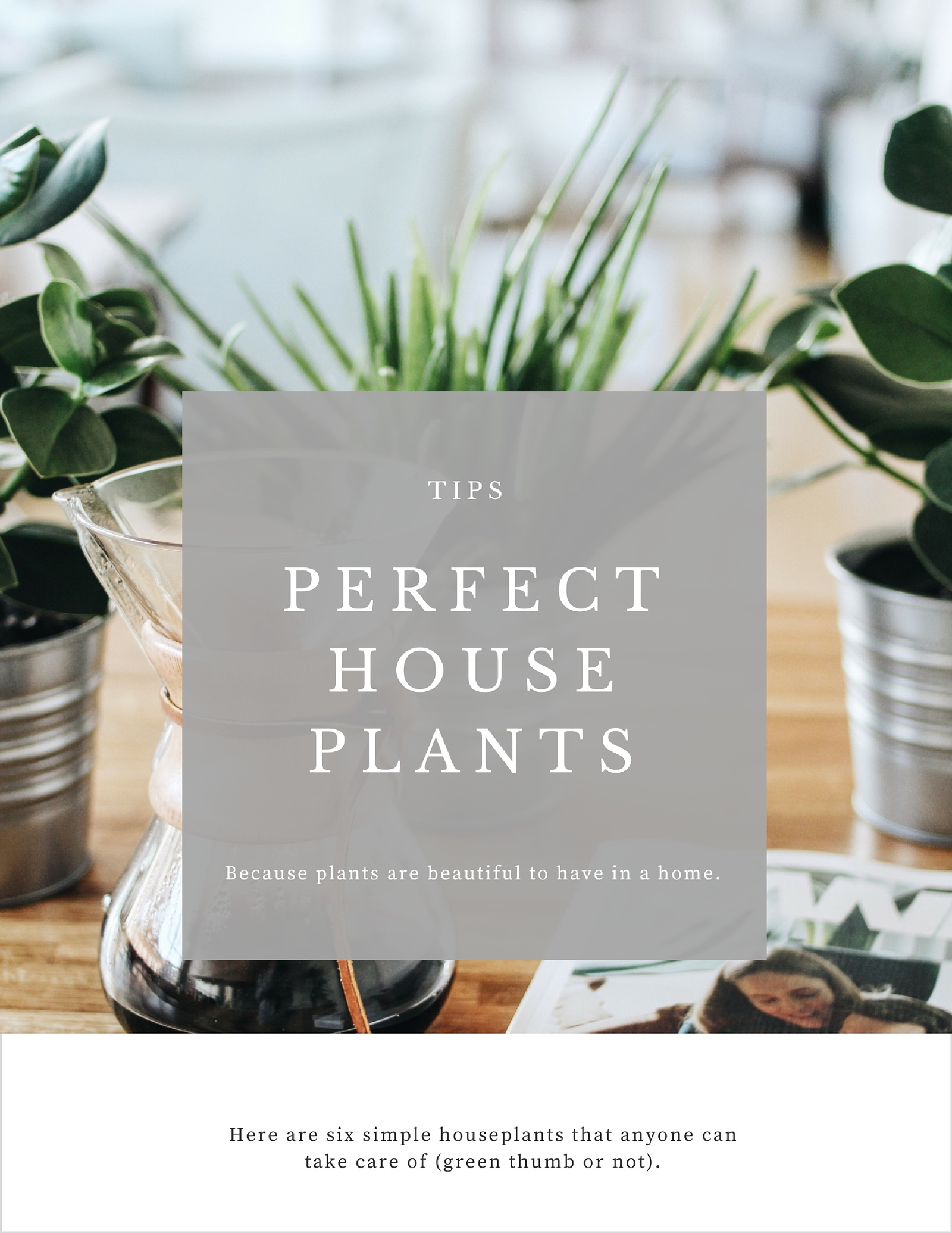6 Simple Houseplants for Any Green Thumb