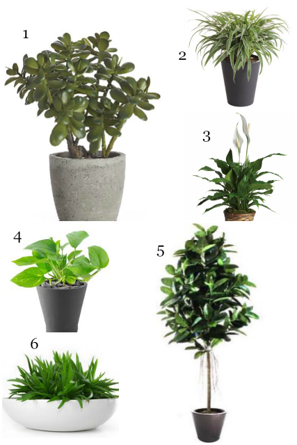 6 simple houseplants for any green thumb how to simplify for Easy to keep indoor plants
