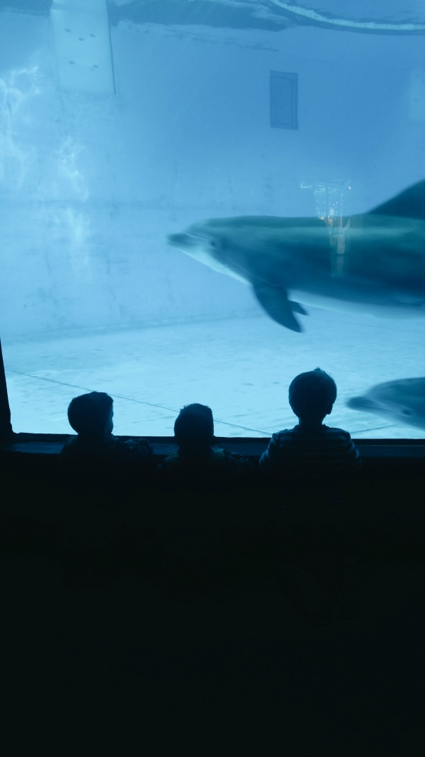 Screaming with delight at the dolphins swimming by at the Baltimore National Aquarium