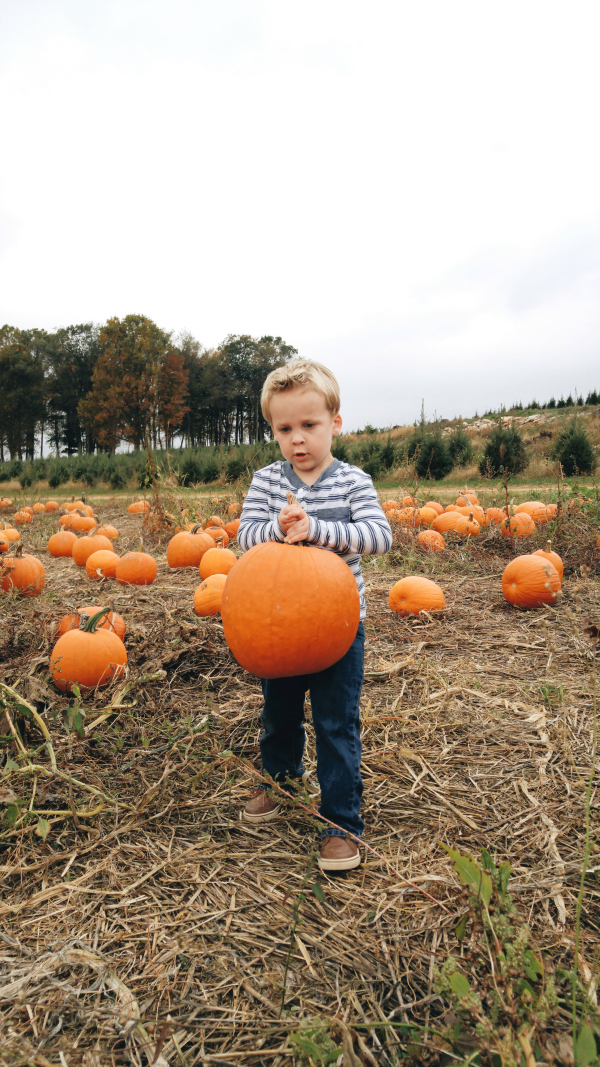 Picking up his perfect pumpkin