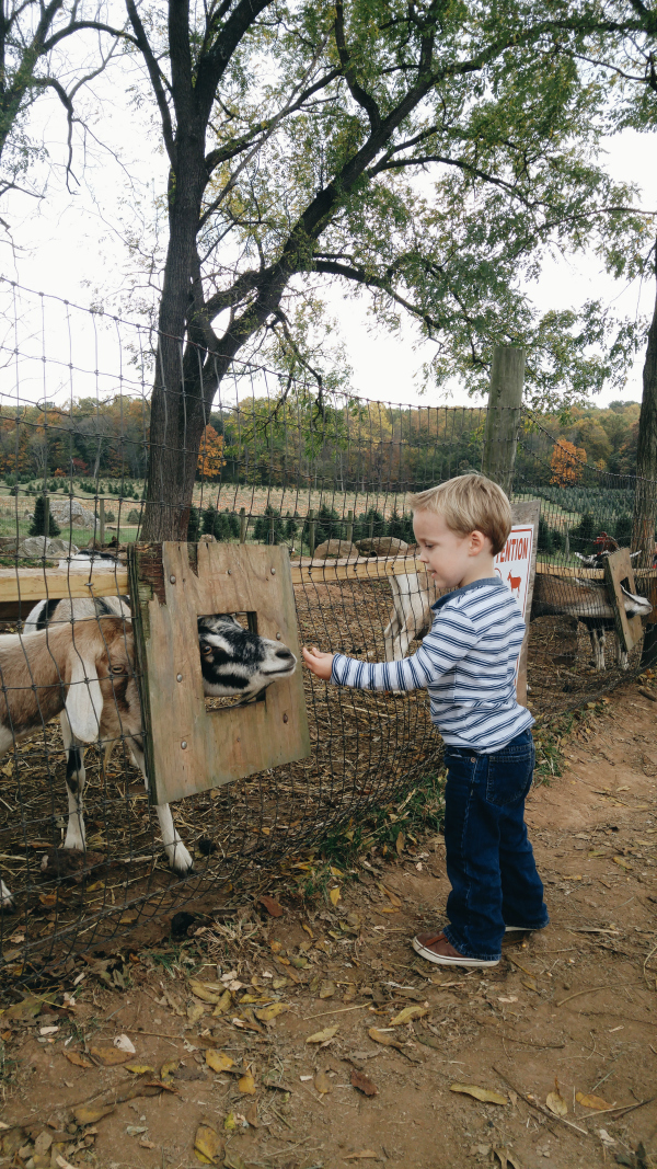 Feeding the goats at the pumpkin patch