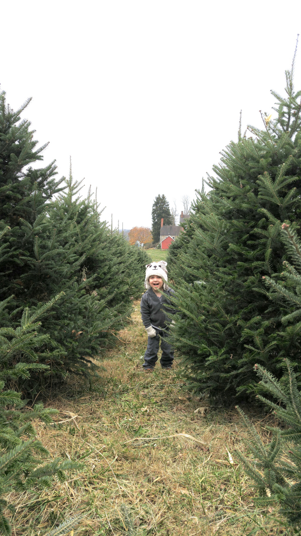 Playing peek-a-boo at the Christmas tree farm