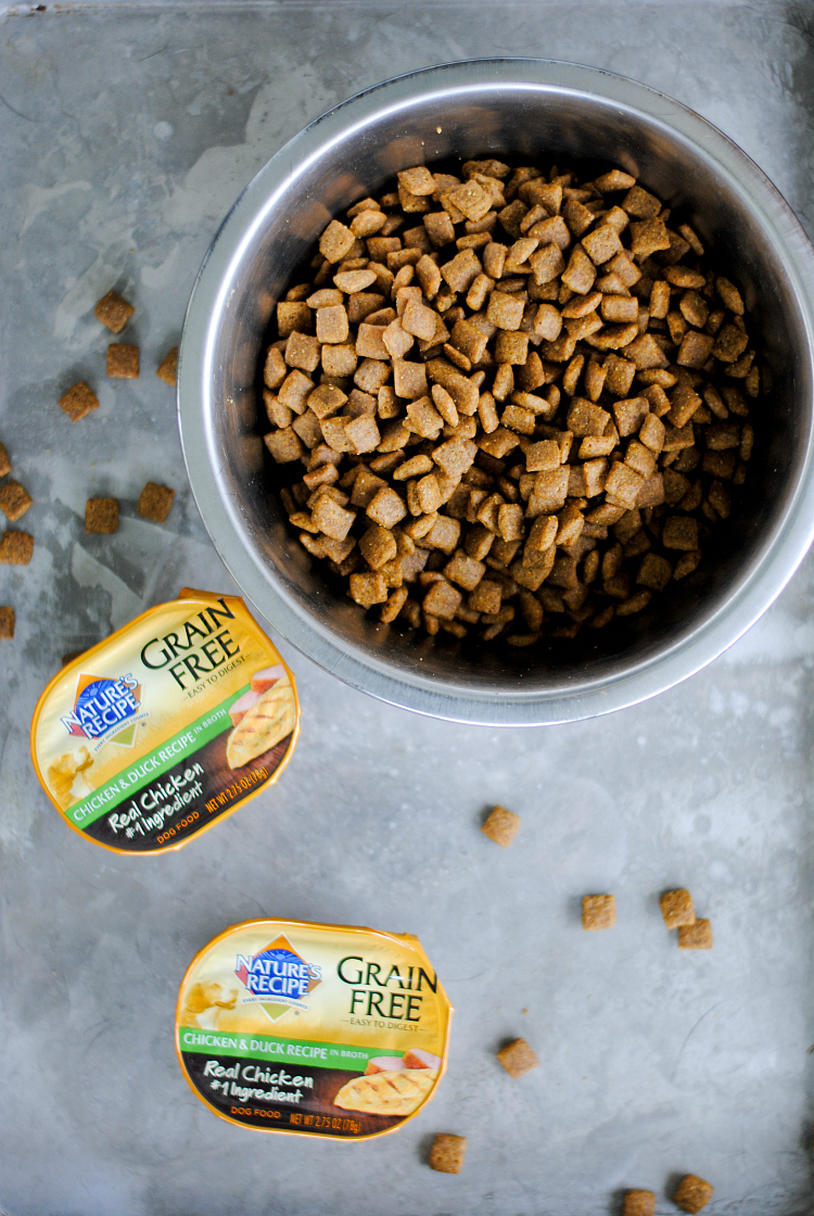 How to Switch Dog Food to a New Brand